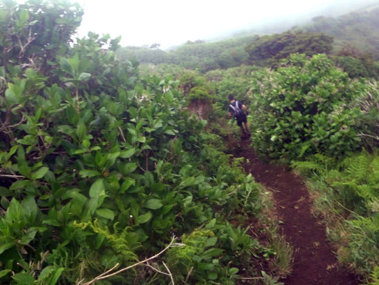 Azores Trail Run: Abstieg zur Levada