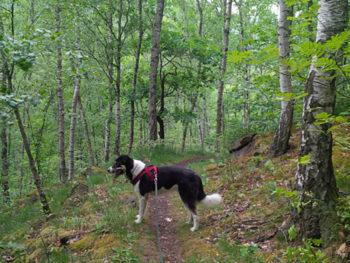 Tharandter Wald Lauf