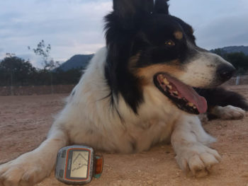 Virtueller Oster Run auf Mallorca – Laufen während der Corona Zeit